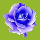 Blueten grun
