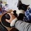 Die_Katze_wars